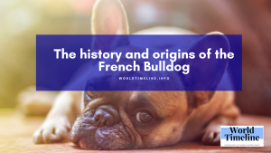 The history and origins of the French Bulldog